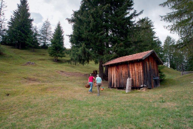 Foraging in de Tiroler natuur. , © Michael Ploner