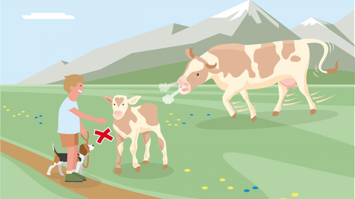 Gedragsregel nr. 3, © Landwirtschaftskammer Tirol