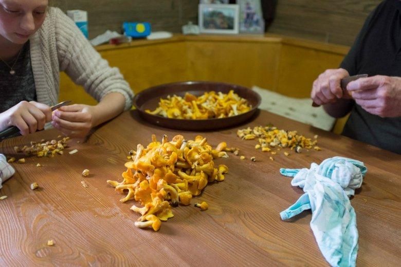 De hele familie helpt mee – niet alleen bij het poetsen van de oesterzwammen.