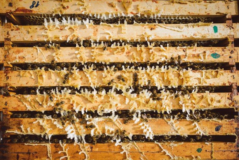 Topzicht op de bijenkast. De groene punten markeren hoe oud de bijenraat is.