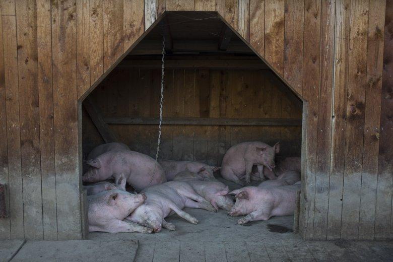 Een paar jaar geleden werd de varkensboerderij bij Außermelang geopend. Het malse varkensvlees is een goede inkomstenbron, aangezien het 'Tiroler almvarken' een felbegeerd merk is.