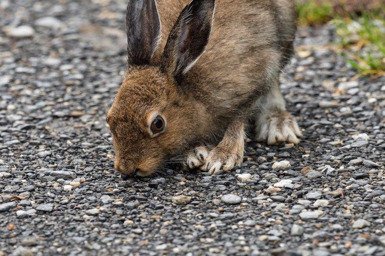 Het lijkt wel een gewoon konijntje, maar dat is het niet!