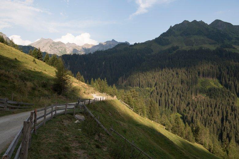 De Forstweg richting de Peer Alm is ook geschikt voor families.