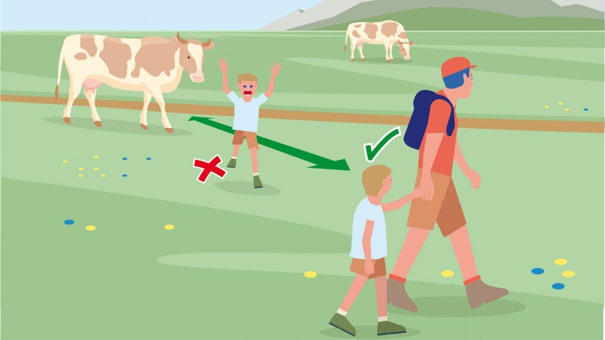 Gedragsregel nr. 7, © Landwirtschaftskammer Tirol