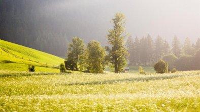 almwiese-waidring-in-tirol, © Defrancesco