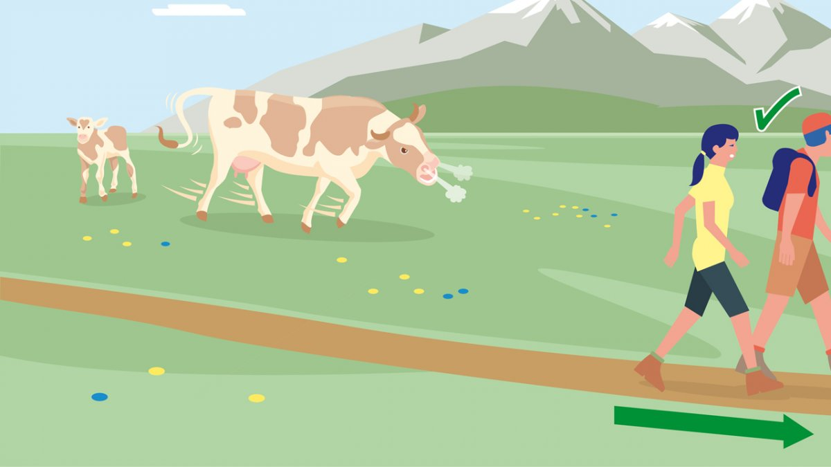 Gedragsregel nr. 8, © Landwirtschaftskammer Tirol