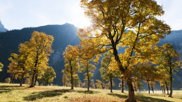 Großer Ahornboden, © Tirol Werbung