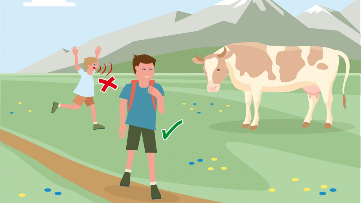 Gedragsregel nr. 2, © Landwirtschaftskammer Tirol