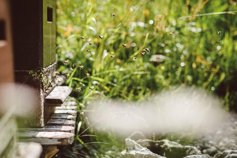 Drukte aan de ingang van de bijenkast: de bijen komen met nectar en stuifmeel terug naar huis – naar hun bijenkast en bijenkoningin.