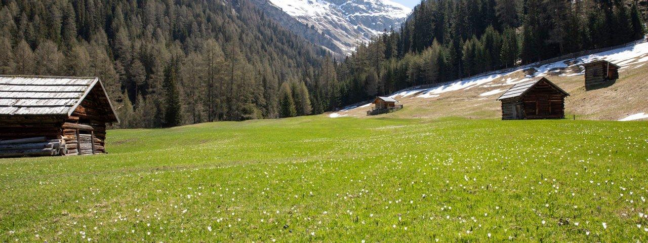 Lente in Pfundser Tschey in der Pfundser Tschey, © Tirol Werbung/Marion Webhofer