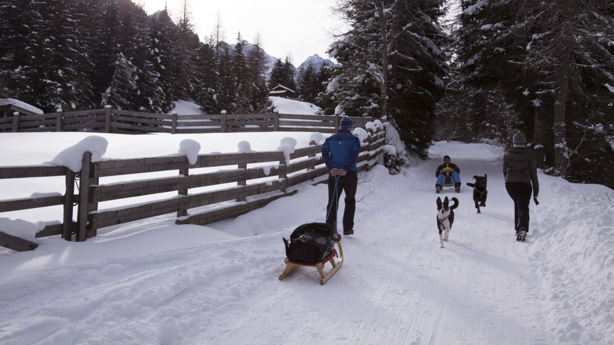 Rodelbaan Kemater Alm, Grinzens, © Tirol Werbung/Markus Jenewein
