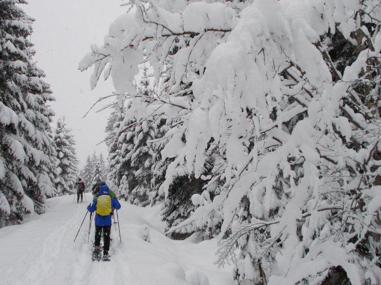 Wandelen met sneeuwschoenen bij Hochfilzen in het Pillerseetal. (Foto: Tirol Werbung)
