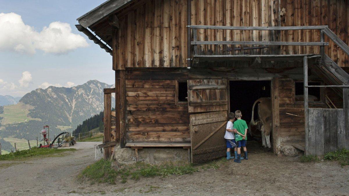 Kohlgrubenalm in Reith in het Alpbachtal, © Tirol Werbung/Alexander Ziegler