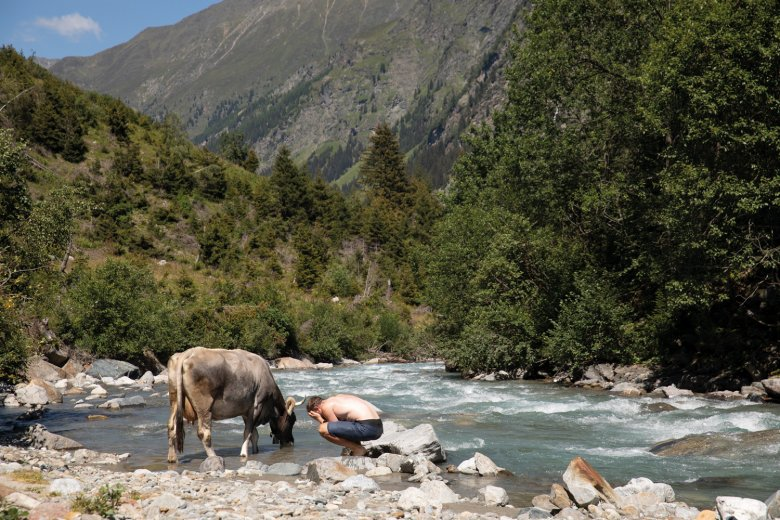 Jannis wordt vergezeld door een koe tijdens een portie afkoeling in de Pitze.