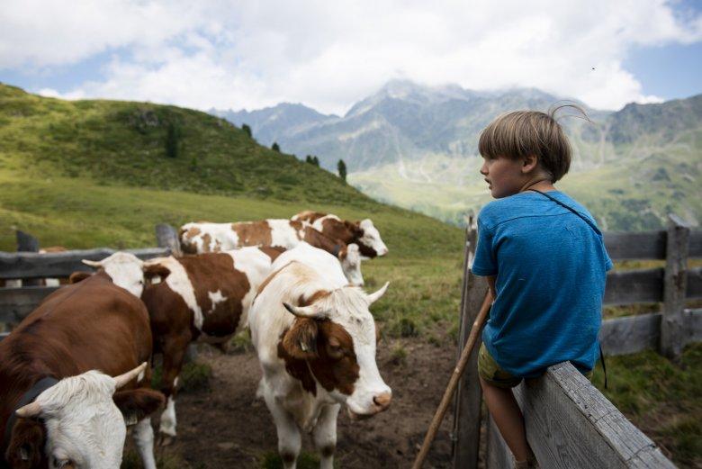 Vroeg geleerd, oud gedaan: Janis zijn zoon Quirin doet ervaring op als herder.