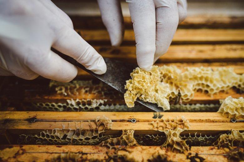Hier wordt voorzichtig de zogenaamde bijenwas verwijderd om de bijenraten, zonder het bijenvolk daarbij te kwetsen, uit de bijenkast te nemen.